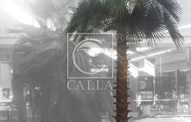 CALLA.pl palm