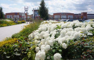 CALLA.pl Silesia City Center 24