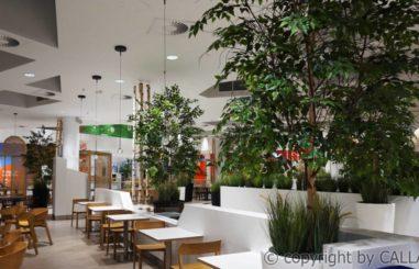 aranżacja zielenią sztuczną oraz dostawa sztucznych drzew na naturalnych pniach Tarasy Zamkowe