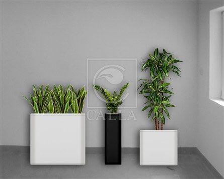 wynajem roślin