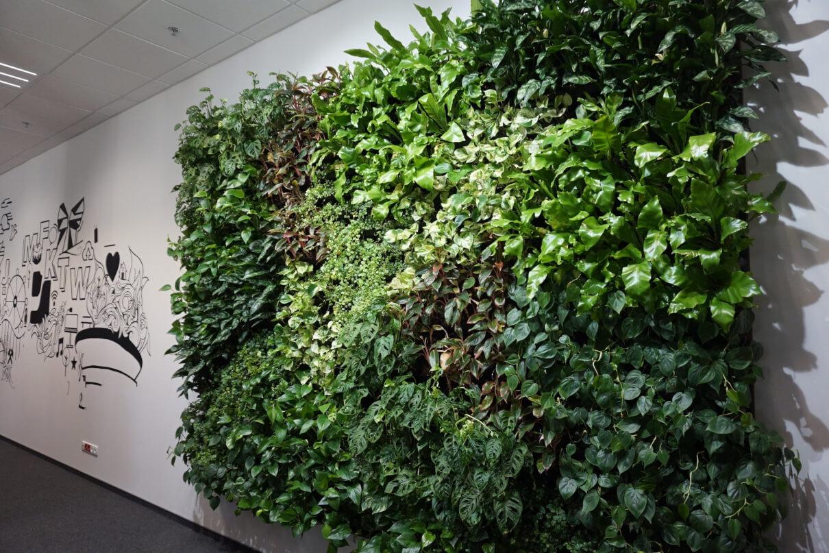 Ściany zielone wewnętrzne izewnętrzne, farmy wertykalne